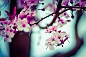 werkveld-bloemen